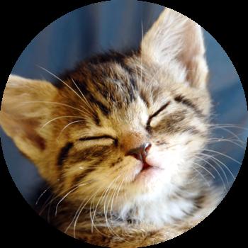 gatito-cachorro