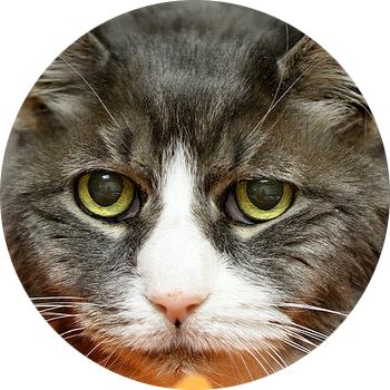 gato2-geriatrico