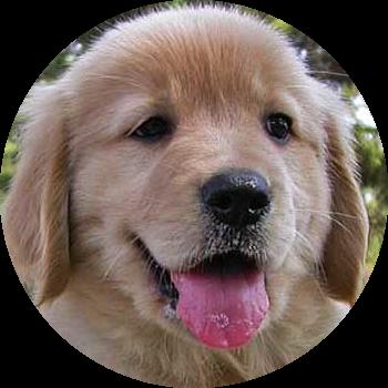 perro2-geriatrico